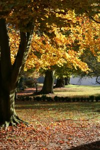 Autumn2012CK 038