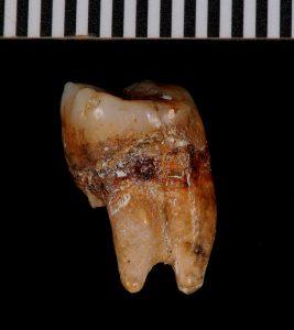 Layer 6 Batadomba-lena 20,000 years ago